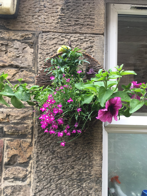 Buy hanging baskets Edinburgh