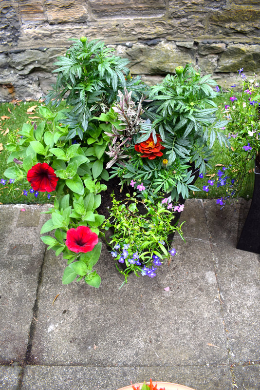 Tall flared garden planters Edinburgh