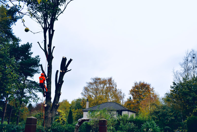 Tree surgery services in Midlothian by JDS Gardening