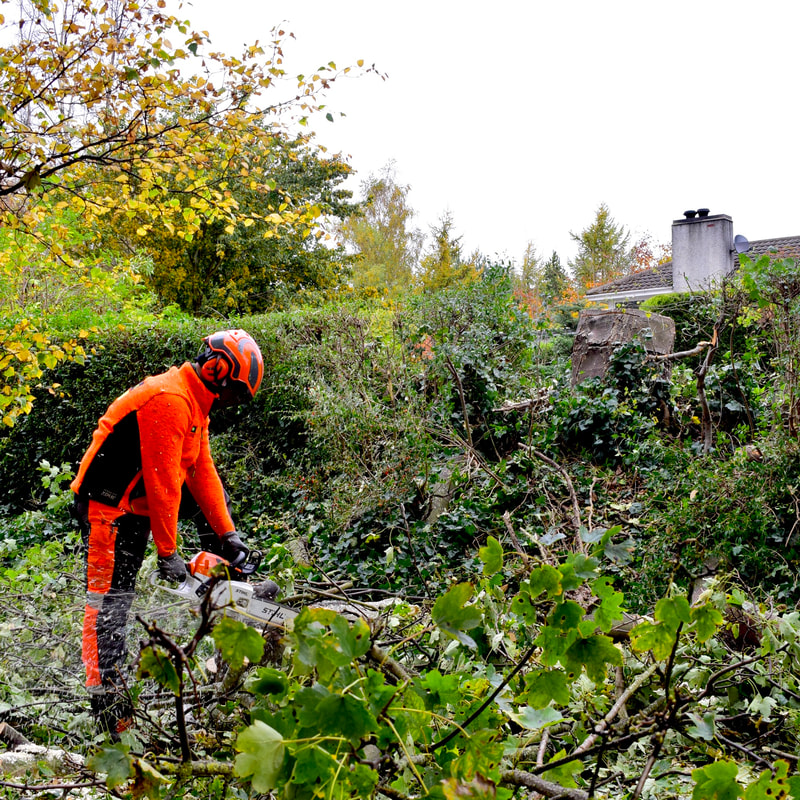 Tree removal services in Edinburgh by JDS Gardening