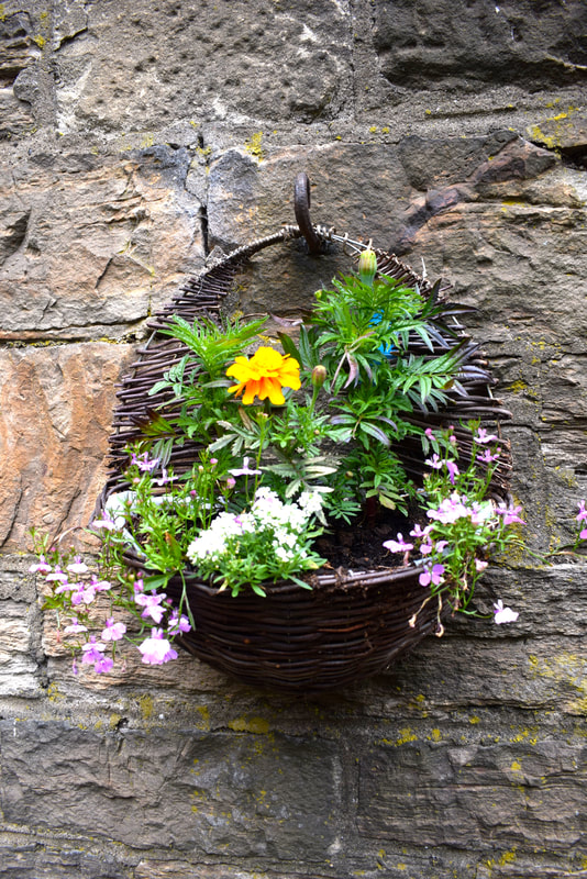 Pre planted hanging baskets Edinburgh