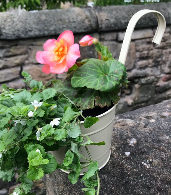 Garden ready hooked hanging planter delivery Edinburgh