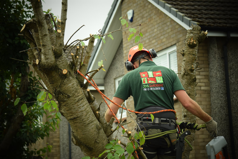 JDS Tree Felling Services Quotes Edinburgh