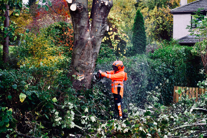 Insured and qualified tree surgeons in Edinburgh, JDS Gardening Services