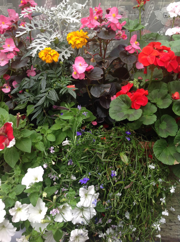 Hanging baskets online Edinburgh