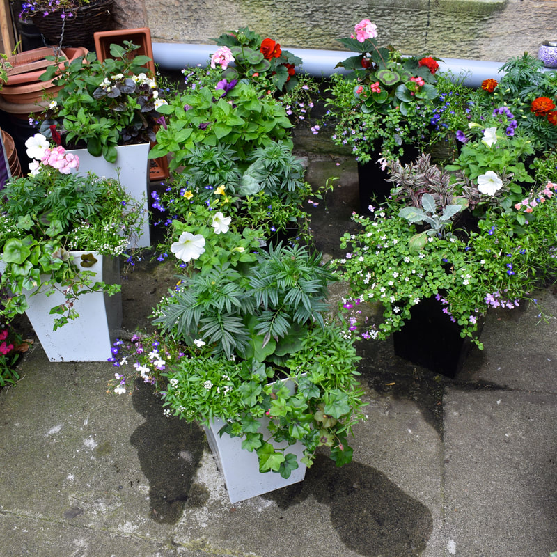 decorative garden planters Edinburgh